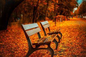 bench-560435_640-300x199 (1)